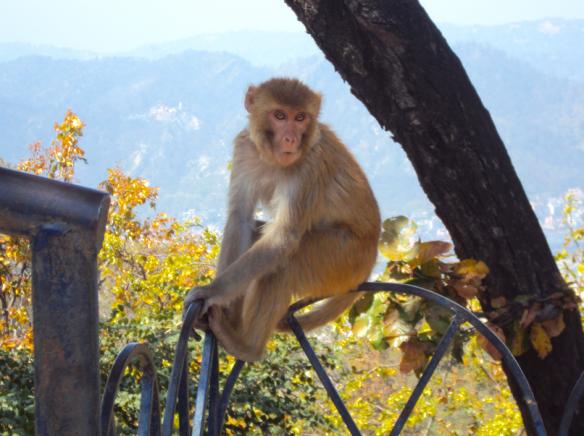 Monkey_temple